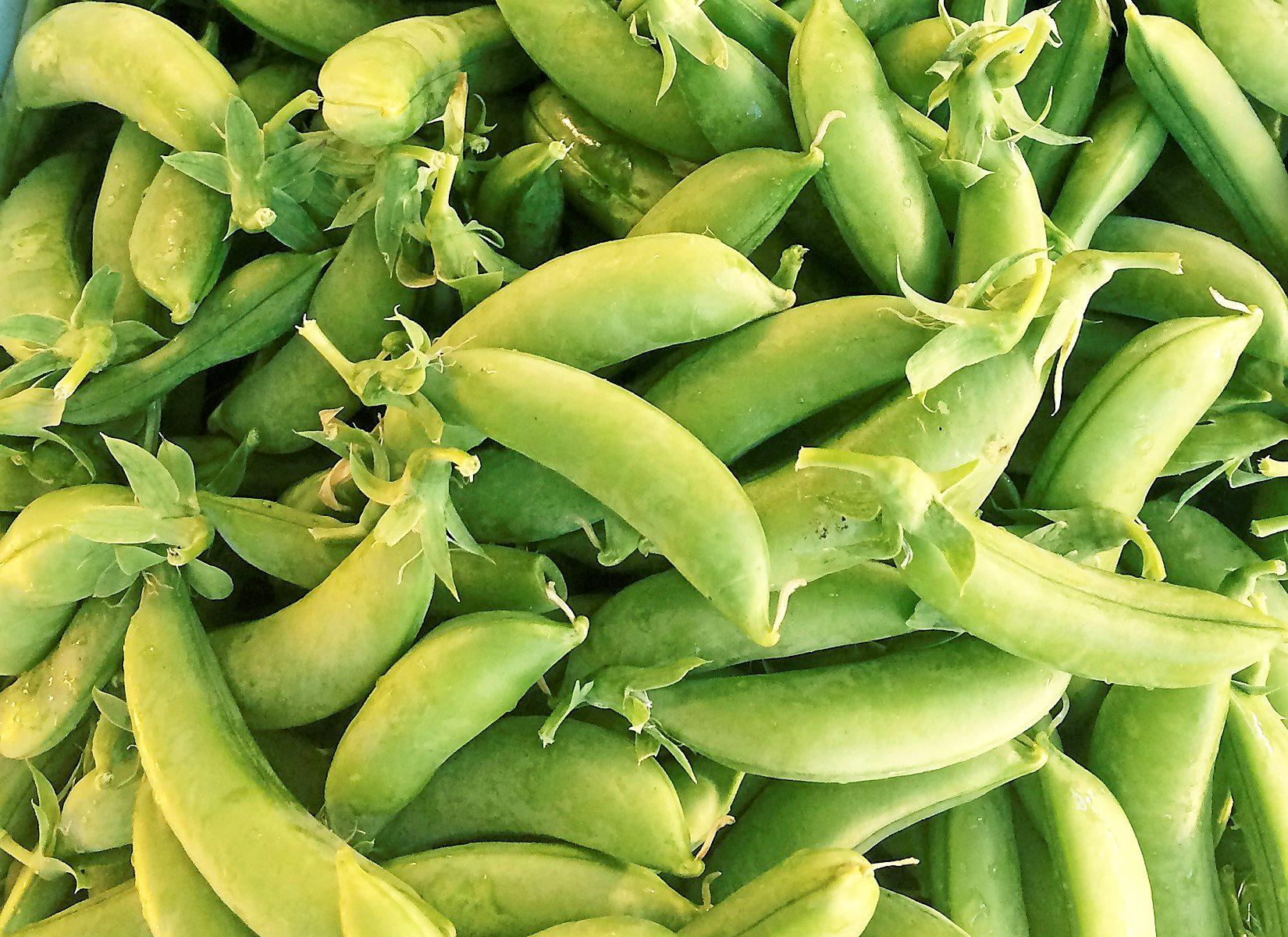 They're similar to the snowpea in that they have an edible pod, but they're a bit plumper, a bit sweeter, and have a bigger pea inside. PHOTO: KATE O'NEILL
