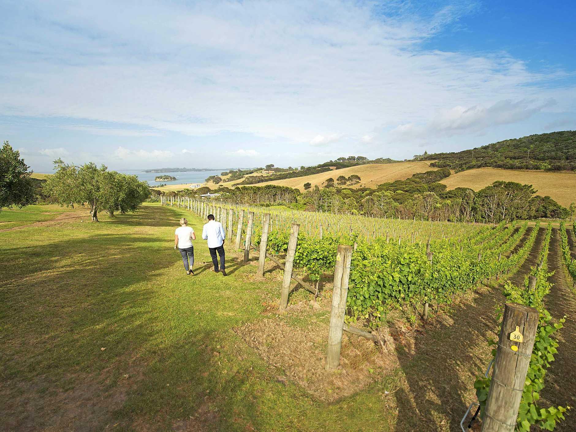 TRAVEL: Enjoy visiting New Zealand's Waiheke Island, near Auckland.