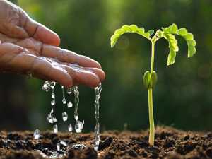 Take these steps to conserve water in your garden