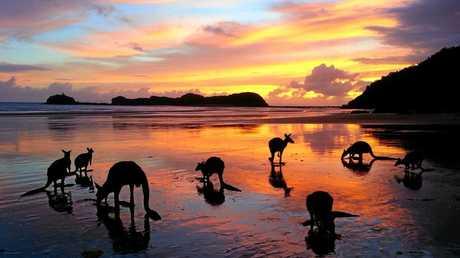 Sunrise at Cape Hillsborough with kangaroos and wallabies. Photo Rebina Criddle