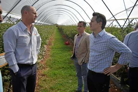 Costa Corindi Berry Farm manager Christian Parsons, Costa general manager David Jordan and Federal Shadow Minister for Trade Jason Clare discuss blueberry exports to China.