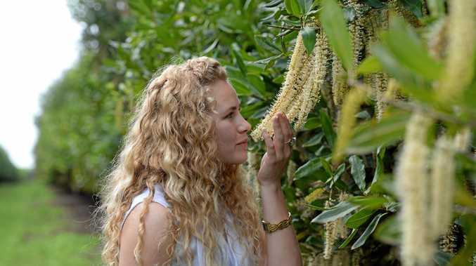 MACADAMIA BLOSSOMS: Mikayla Haupt takes in the aroma of Spring in Bundaberg.