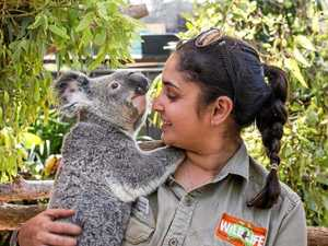 Koala attraction reopens after Cyclone Debbie