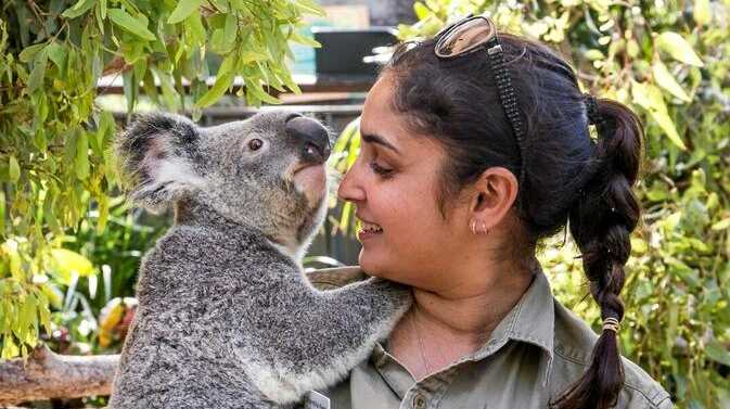 UP AND RUNNING: This week, Wild Life Hamilton Island was officially 'koalaified' to reopen.