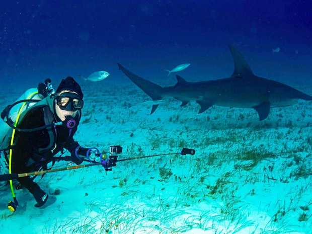 TONY Isaacson , winner of the 2017 Healthy Land and Water Awards lifetime achievement award, sees swimming with sharks as a lucrative income stream for Sunshine Coast tourism.