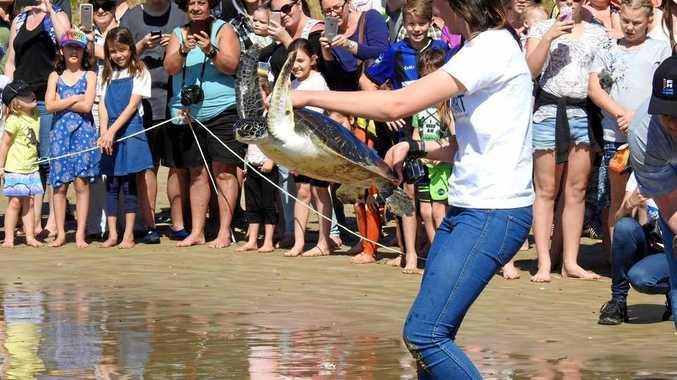 Lauren from CHART releases Green Sea Turtle, Captain.