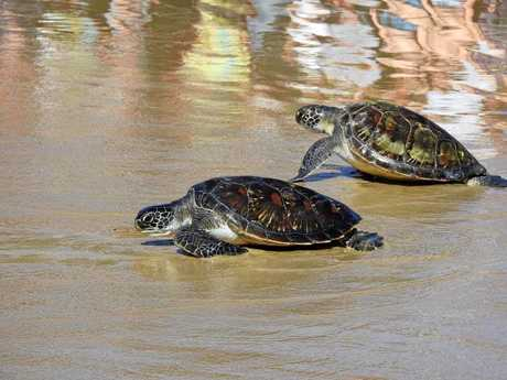 HOMECOMING: Pebby and Captain race to the waves.