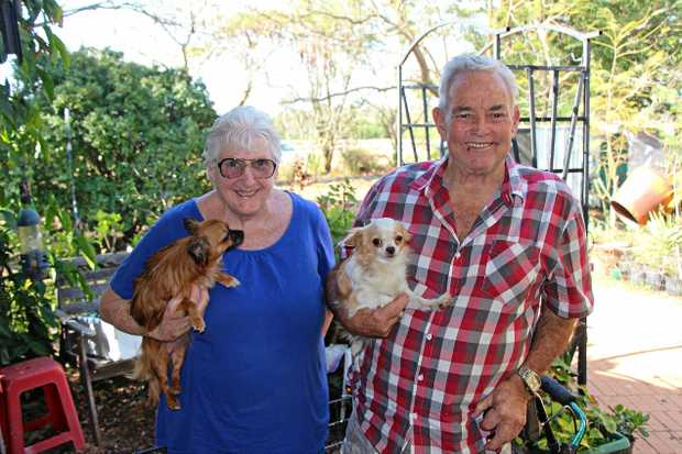 FUR BABIES: Barbara and Robert Taylor have always shared a love for their dear chihuahuas.
