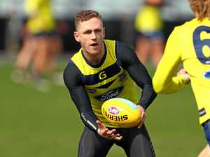 Selwood return no risk, say Cats