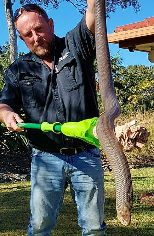 Tony Harrison believes the snake could weigh around the 3.5kg mark. Photo: Gold Coast and Brisbane Snake Catchers