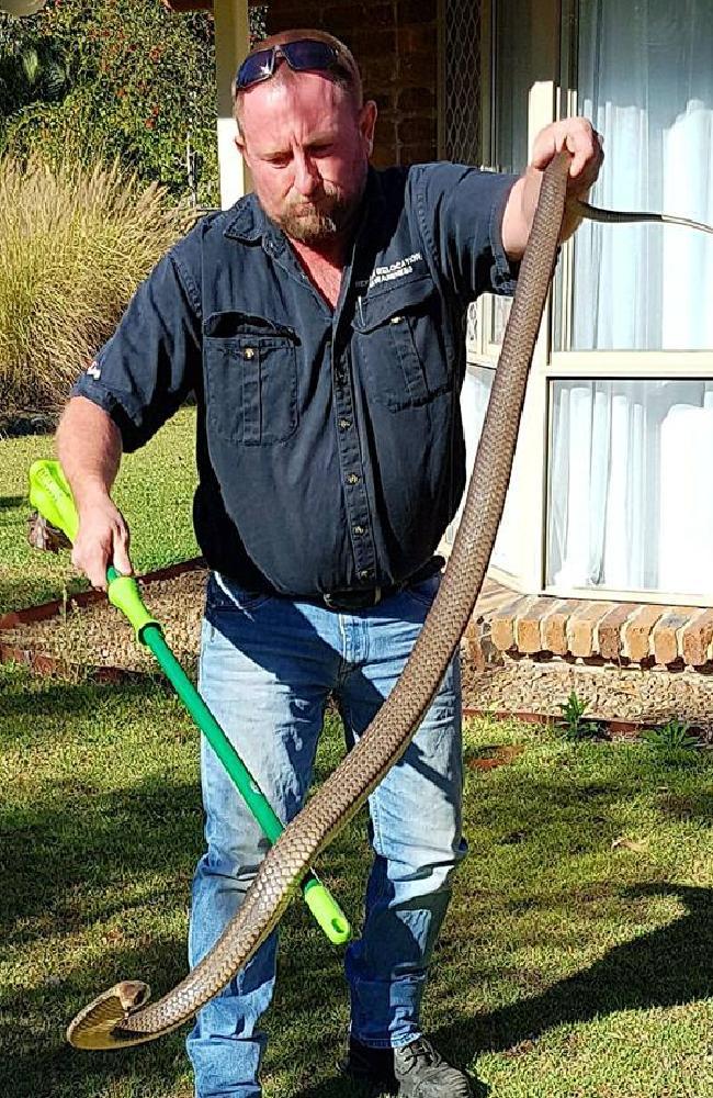 Not a carpet python! Photo: Gold Coast and Brisbane Snake Catchers