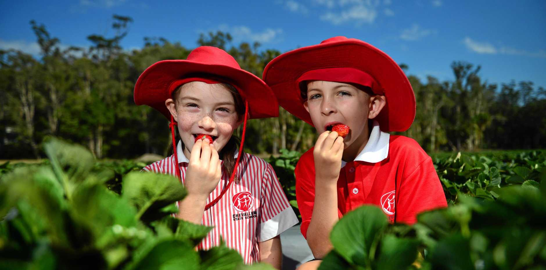 NATURALLY GOOD: The annual Chevallum Strawbfest is on again and Chevallum State School students Piper McGuire and Preston Jackson are tucking in early.