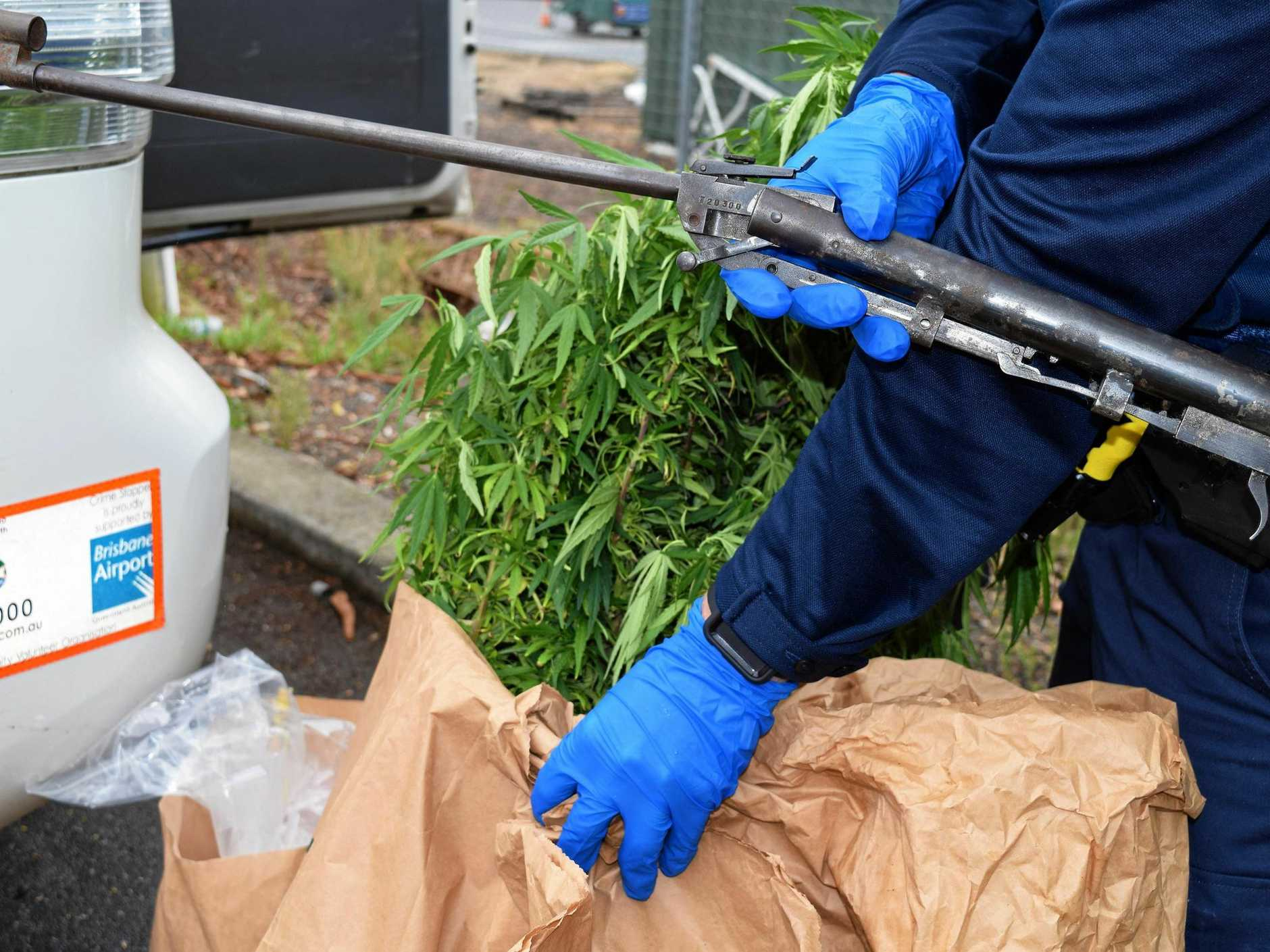 Police from Ipswich's Tactical Crime Squad seized a large amount of marijuana from a property at Swanbank.