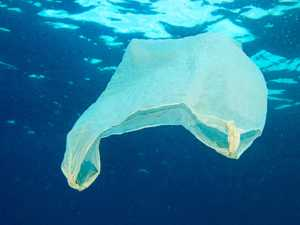 'Plastic bag ban? A brainless idea from so-called do-gooders'