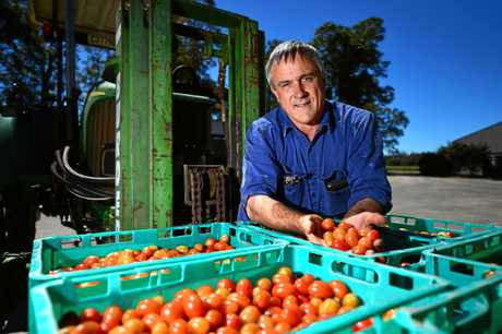 BEERWAH: Third generation farmer John Allen at his Oakland farm with some cherry tomatoes.