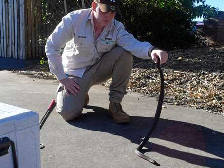 Ipswich Snake Catchers 24/7 owner Brandon Wilkinson was called to Ipswich homes nine times in the past two days and 12 times in three weeks.