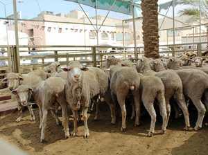A focus on animal welfare