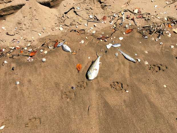 BYCATCH: Alan Corbett said he was disgusted to find hundreds of dead fish along the foreshore on Monday.
