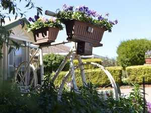 Joyous family garden