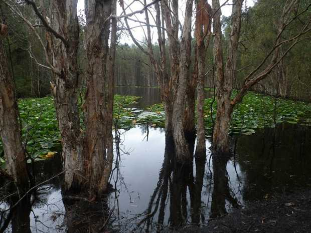 Wetlands at Bicentennial Park, Ballina. Photo taken by James Morningbird, bilbobasho Travel Blog.