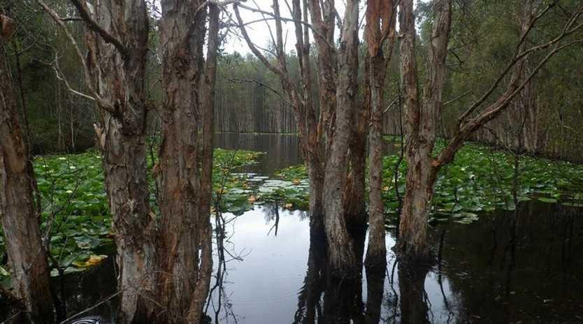 Wetlands at Bicentennial Park, Ballina. Photo taken by James Morningbird, bilbobasho Travel Blog.