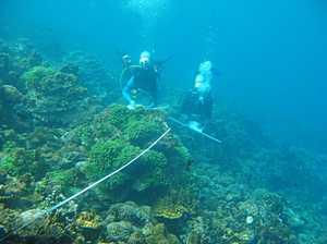 SCU researcher's coral sex breakthrough