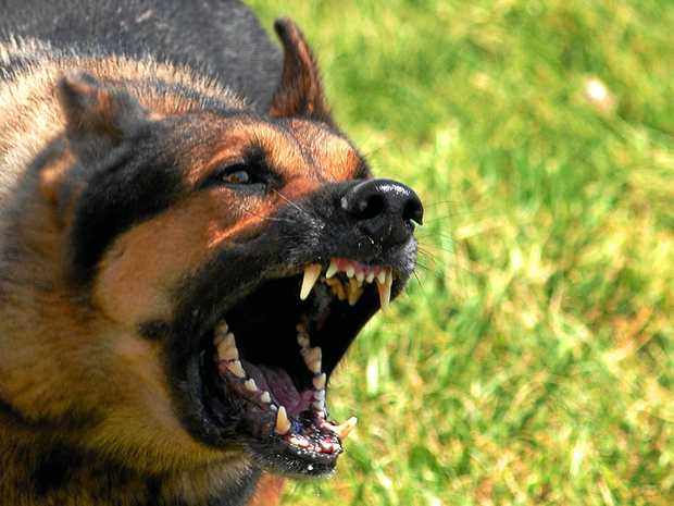 Sunshine Coast Councillors will discuss a plan to manage the region's dangerous and menacing dogs.