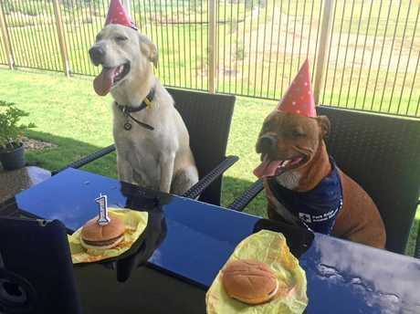 VOTE CARGO: Cargo's first birthday party with his best mate, Doug.