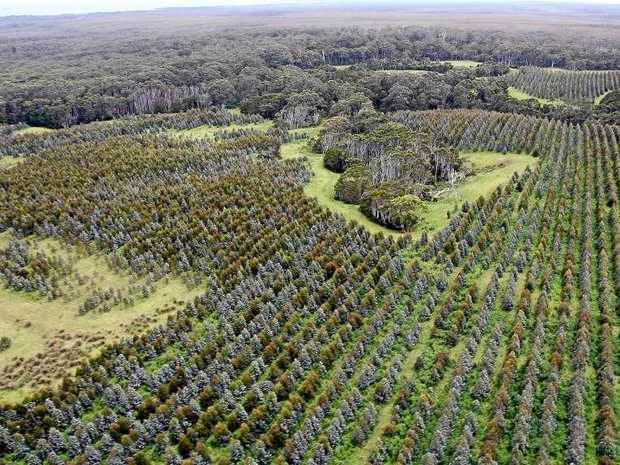 Tasmania's government is under fire over the sale of 29,000ha of pulpwood plantations.