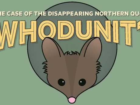 School holiday activities September 2017. Follow the clues at Cobb and Co Museum's self-guided trail to help solve the case of the disappearing Northern Quoll these school holidays.