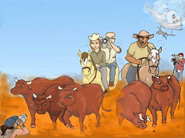 NEW SHOW: Contract mustering camps, that catch clean-skins bulls in the Northern Territory, will be filmed by a TV crew this month.