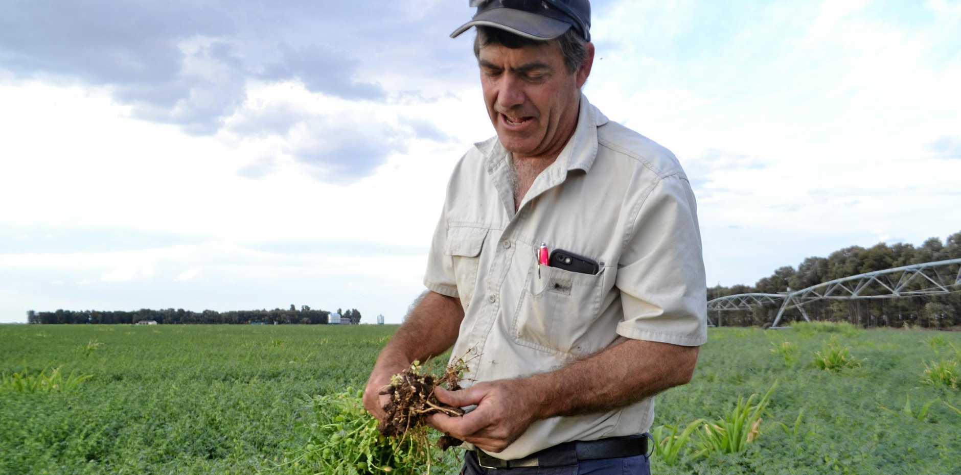 BEST PRACTISE: Hopeland cotton farmer Greg Bender recently won the Vanderfield Grower of the Year Award.