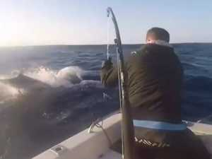 Flying marlin almost spears man