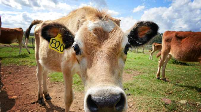 Northern Rivers dairy farmers have sued a local concreter.