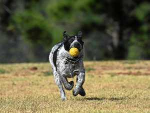 Rising temperatures put pets at risk