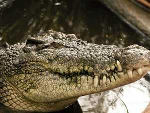 CROC ALERT: Crocodile spotted in Boyne River