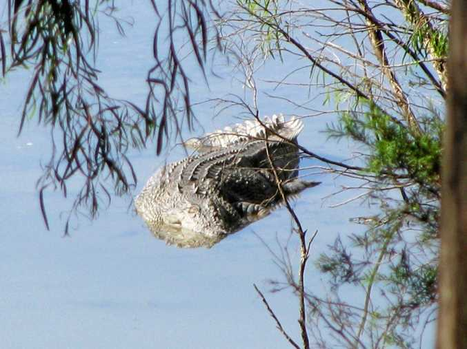 A 5.2m croc has been found dead, shot in the head in the Fitzroy River.