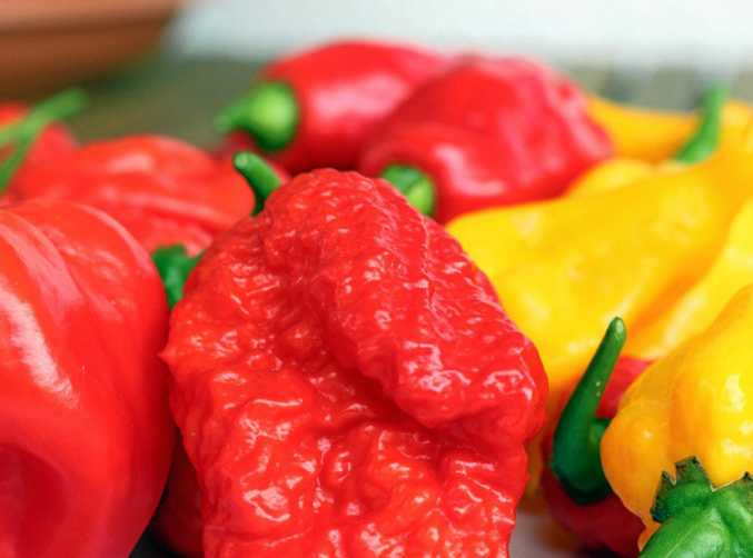 The Carolina Reaper chilli is the hottest chilli in the world.
