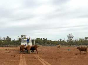 Drought in western Queensland