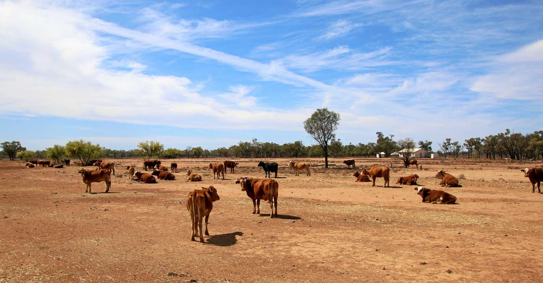 Photos of Tricia Agar's property, Barbara Plains in western Queensland.