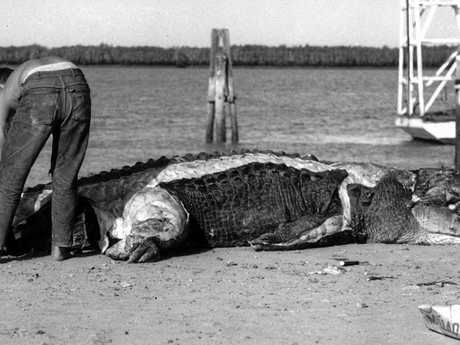 A massive 4.8m crocodile shot by overseas hunters near Port Alma in 1963.