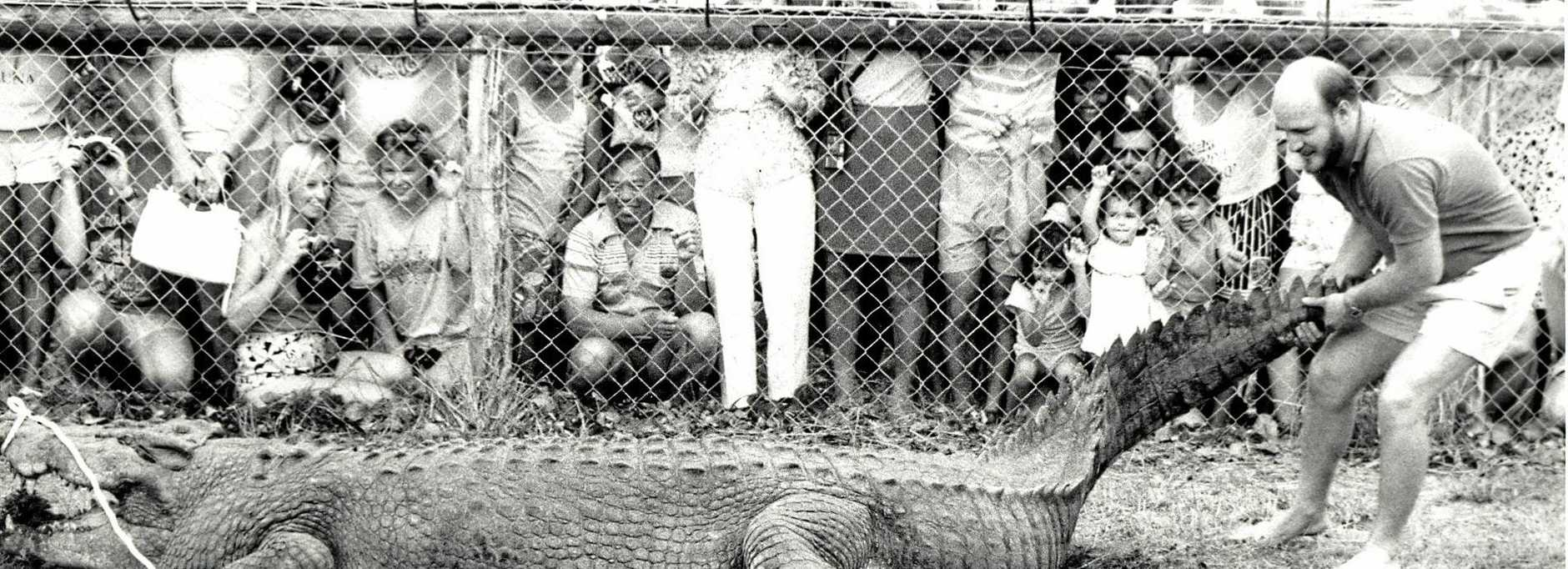A hug 5.3 metre crocodile rolls and twists with open jaws as Simon Lever attempts to release it into a pond at Koorana Crocodile Farm in January, 1989.