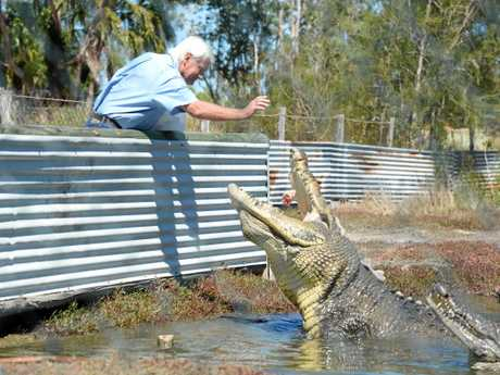 Koorana crocodile farm owner John Lever feeds Buka, a one tonne crocodile. Photo Rachael Conaghan/The Morning Bulletin