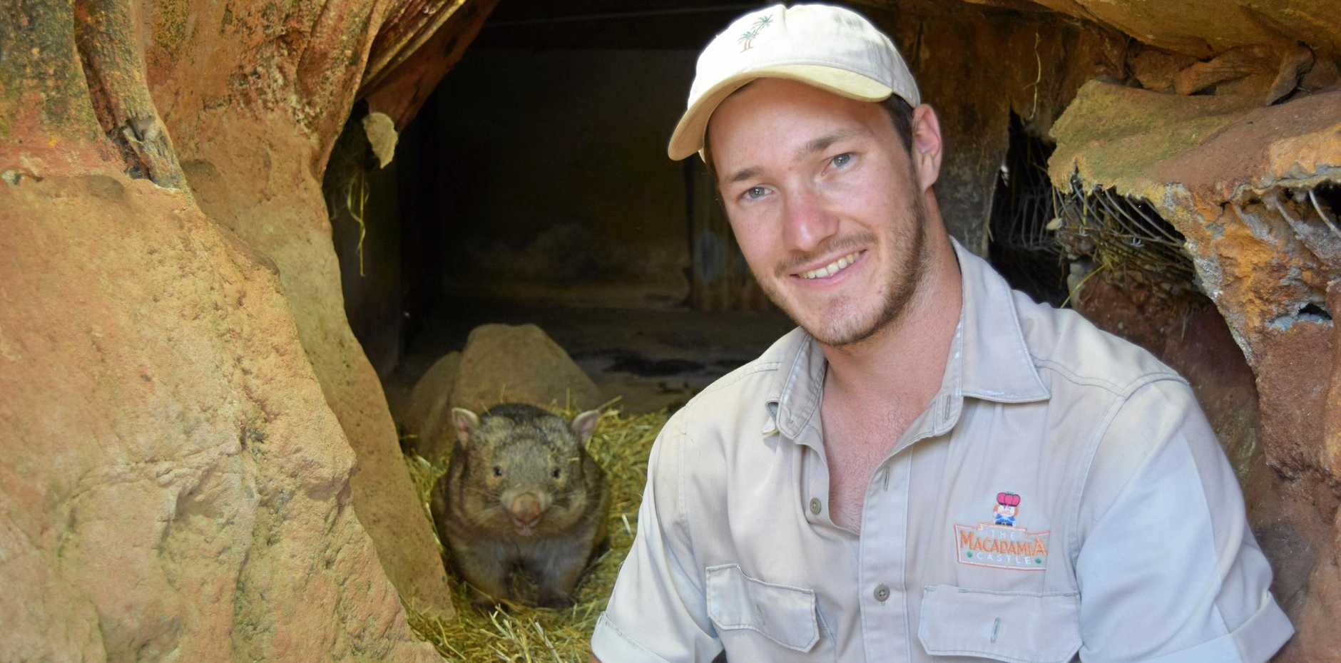 Manda in her new den at the Macadamia Castle with keeper James Kelly.