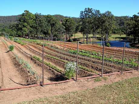 The Ogilvie Group's Maravista Farm in the Noosa hinterland.