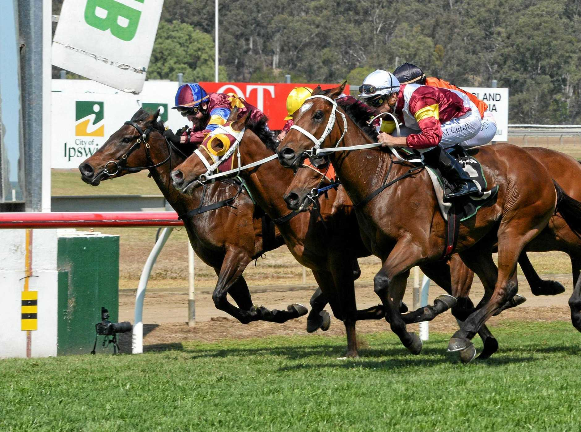 Loving Home (right) narrowly beats a tight field to win the City of Ipswich Spring Stayers Cup Open Handicap at Bundamba Racetrack on Saturday.