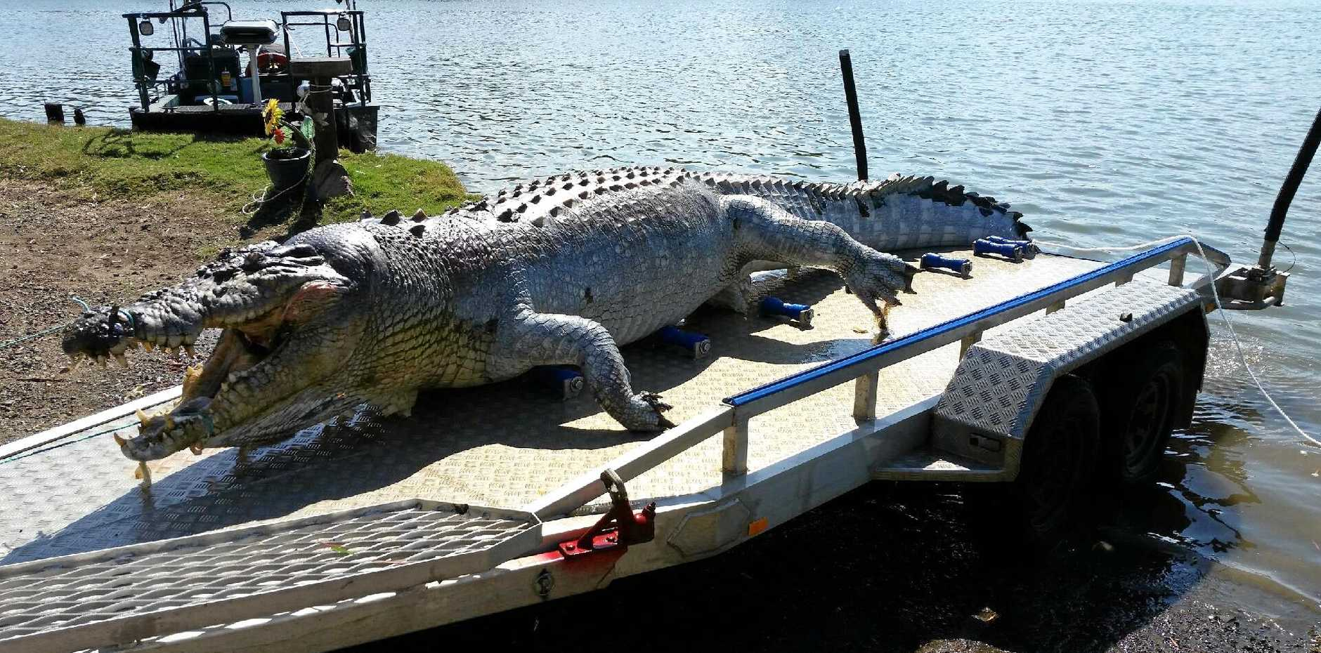 Images of a 5.2m crocodile found shot in the Fitzroy River, Rockhampton on Thursday, September 21. Police and the EHP are appealing for public assistance in their investigations to find the culprit.