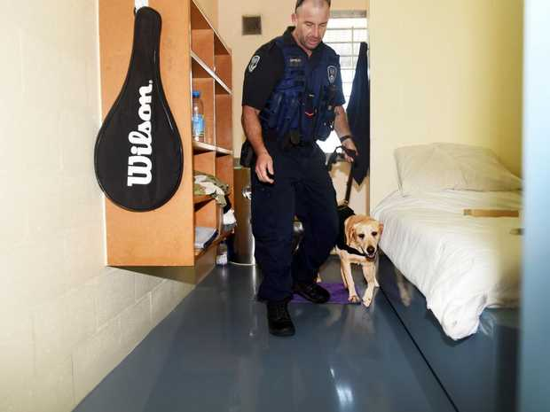 Maryborough Correctional Centre - Corrective Services Dog Handler Steve Berthelsen with Nera. With seven years on the job, Nera is nearing retirement from sniffing out the contraband.