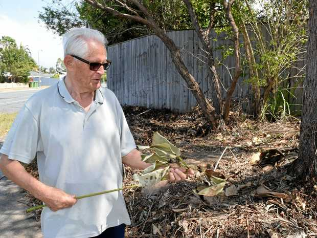 WHAT'S LEFT: Edwin Grantham looks at the brown remains after Noosa Council removed trees and plants from his 'private property'.