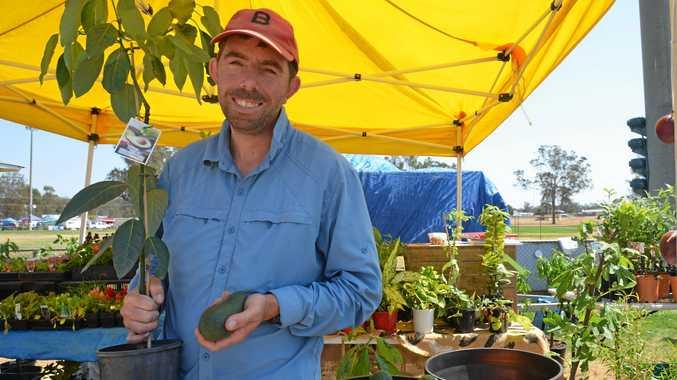 Berian Carstais was selling avocado trees at the Wondai Garden Expo.
